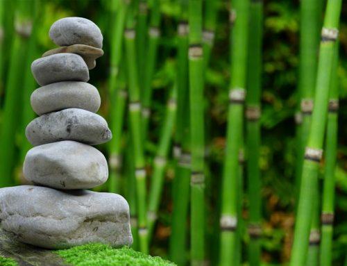 Бамбукът като източник на силициев диоксид