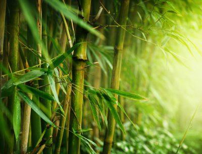 бамбук на прах
